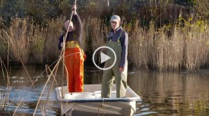 Ruim baan voor de vis